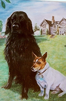 Pastel painting of two dogs on lawn by Soraya